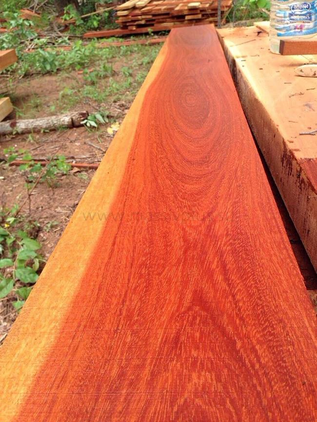 Ценная древесина